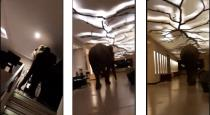 Elephant entered in to srilanka hotel video goes viral