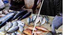 Formalin applied fishes are recovered from covai fish market