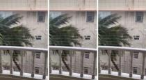Mumbai rain coconut tree viral video