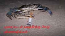 Crab-smoking-video