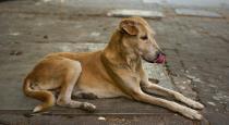 Women killed by 4 women for adopting street dog