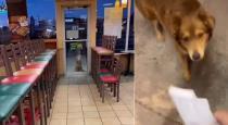 Stray dog eating hotel at every night Subway sally